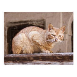 Gato perdido en Fes Medina, Marruecos 2 Postal