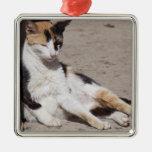 Gato perdido en Fes Medina, Marruecos Adorno Navideño Cuadrado De Metal
