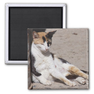 Gato perdido en Fes Medina, Marruecos Imán Cuadrado