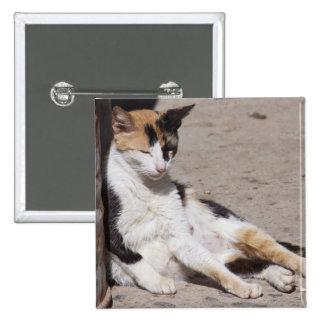 Gato perdido en Fes Medina, Marruecos Pin Cuadrado