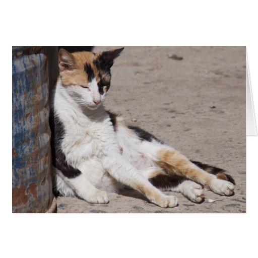 Gato perdido en Fes Medina, Marruecos Tarjeta De Felicitación