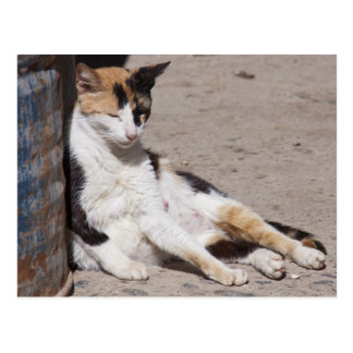 Gato perdido en Fes Medina, Marruecos Postal