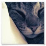 Gato perezoso fotografias