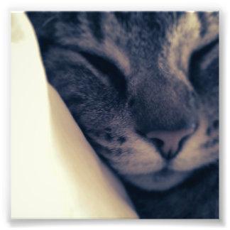 Gato perezoso fotografías