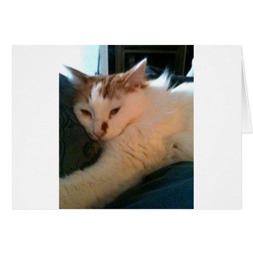 Gato perezoso, relajado
