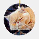 Gato persa anaranjado adorno navideño redondo de cerámica