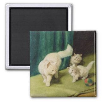 Gato persa blanco con dos gatitos imán cuadrado