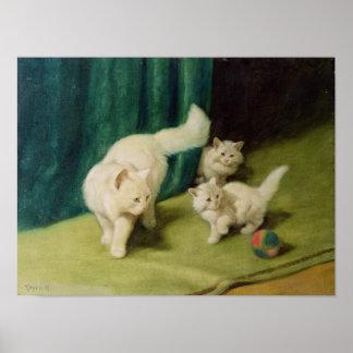 Gato persa blanco con dos gatitos póster