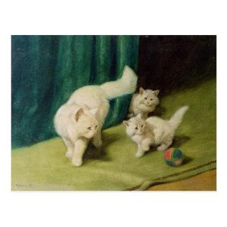 Gato persa blanco con dos gatitos postal