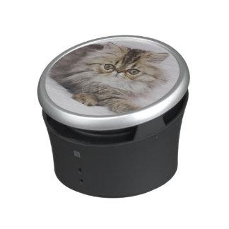 Gato persa, catus del Felis, Tabby de Brown, Altavoz
