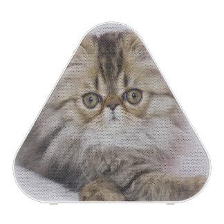 Gato persa, catus del Felis, Tabby de Brown, Altavoz Bluetooth