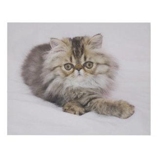 Gato persa, catus del Felis, Tabby de Brown, Cuadro