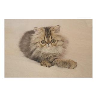 Gato persa, catus del Felis, Tabby de Brown, Cuadros De Madera