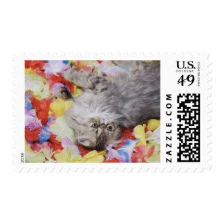 Gato persa, catus del Felis, Tabby de Brown, Estampilla