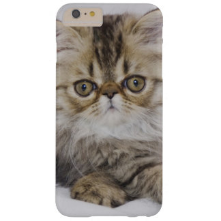 Gato persa, catus del Felis, Tabby de Brown, Funda Para iPhone 6 Plus Barely There