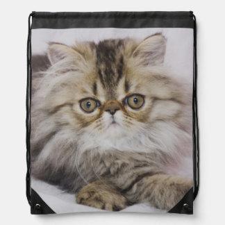 Gato persa, catus del Felis, Tabby de Brown, gatit Mochila