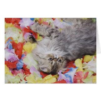 Gato persa, catus del Felis, Tabby de Brown, gatit Tarjeta De Felicitación