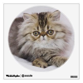 Gato persa, catus del Felis, Tabby de Brown, gatit Vinilo Adhesivo