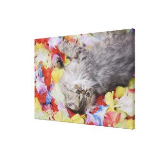 Gato persa, catus del Felis, Tabby de Brown, Impresión En Lona Estirada