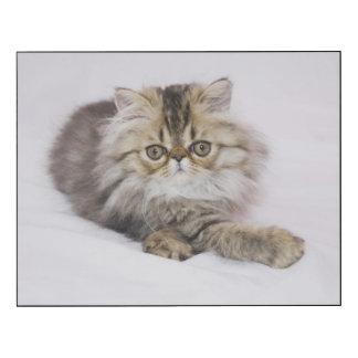 Gato persa, catus del Felis, Tabby de Brown, Impresión En Madera