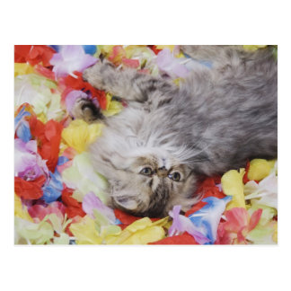 Gato persa, catus del Felis, Tabby de Brown, Tarjetas Postales