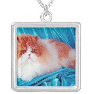 Gato persa collar plateado