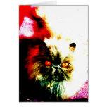 Gato persa con los ojos anaranjados felicitación