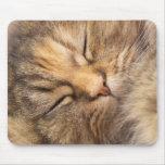 Gato persa dormido alfombrillas de ratones