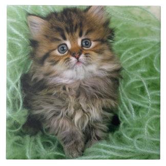 Gato persa es una de las más viejas razas del gat azulejo cerámica