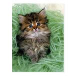 Gato persa; es una de las más viejas razas del gat tarjetas postales