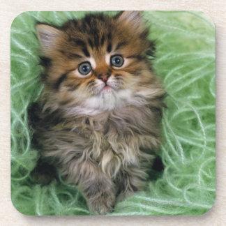 Gato persa; es una de las más viejas razas del posavasos