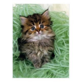 Gato persa; es una de las más viejas razas del postal
