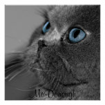 Gato persa gris con los ojos azules poster