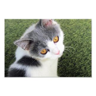 gato fotografias