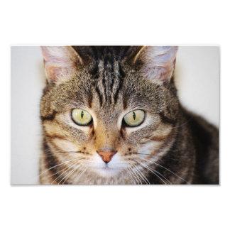 gato impresiones fotográficas
