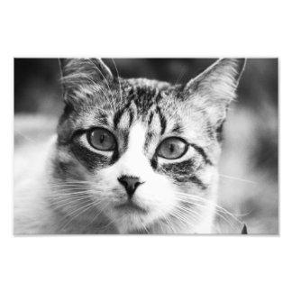 gato fotografías