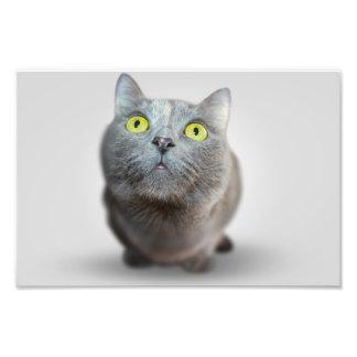 gato arte fotografico
