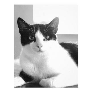 gato plantillas de membrete