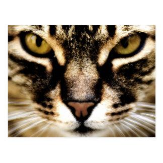 Gato Postales