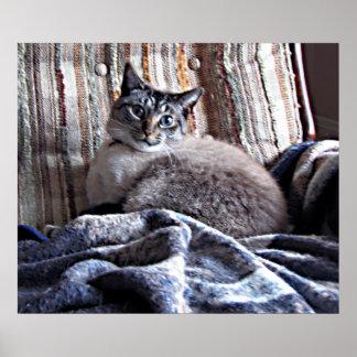 Gato Póster