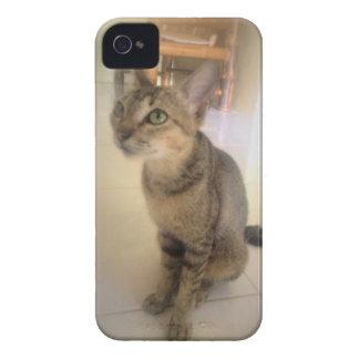 gato precioso iPhone 4 cárcasas