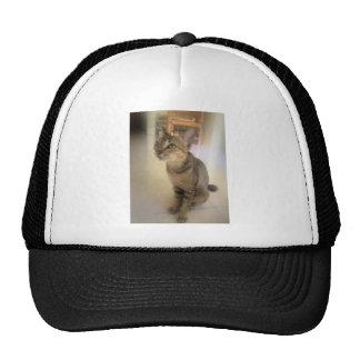 gato precioso gorro