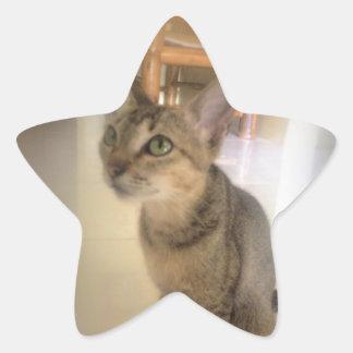gato precioso pegatina en forma de estrella