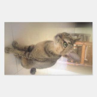 gato precioso pegatina rectangular