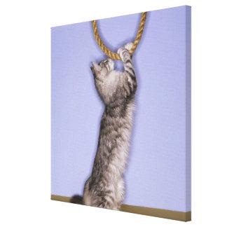 Gato que alcanza para la cuerda lona envuelta para galerias