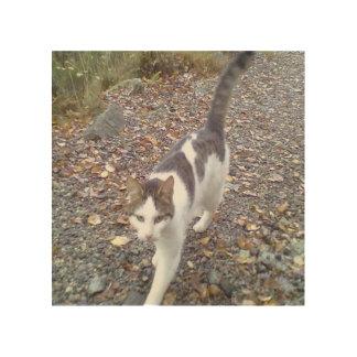 Gato que camina cuadros de madera