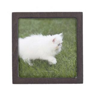Gato que camina en césped cajas de regalo de calidad