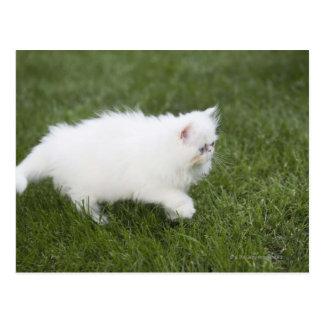 Gato que camina en césped tarjeta postal