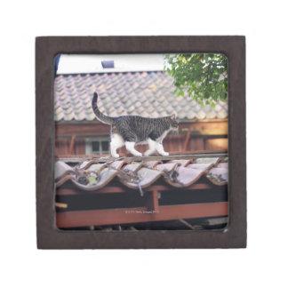 Gato que camina en el tejado de la vertiente caja de joyas de calidad