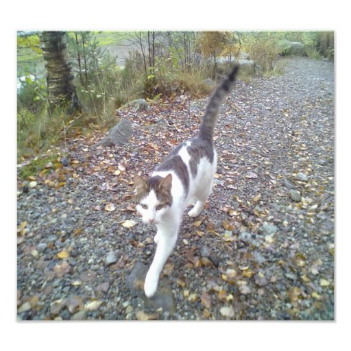 Gato que camina cojinete